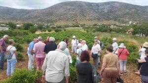 athens private wine tour