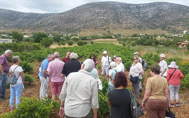 Athens Wine Tour