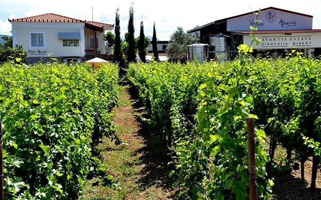 Evia Wine Tour