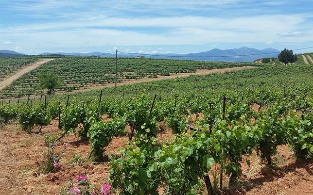 Mantinia Wine Tour