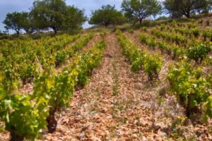 vins mylonas vineyards